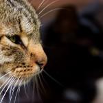 Cats__by_mindsunniti