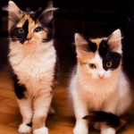Cats_by_HerreVermeer