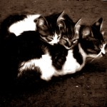 Cats_by_morcus