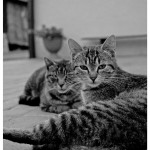 cats_by_pansowa